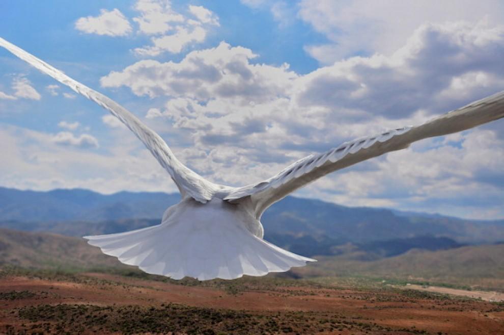 Uccello in volo